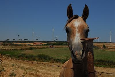 """Windpark """"Windfarm ICR"""" in Isola di Capo Rizzuto, Kalabrien"""